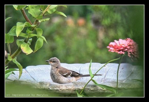 bird bath 2.jpg